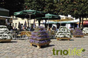 trio_square